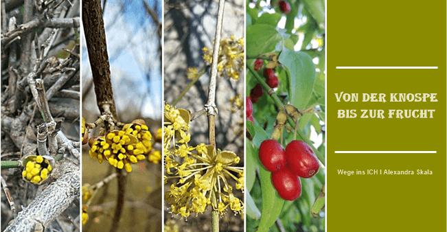 Von der Knospe bis zur Frucht Dirndl