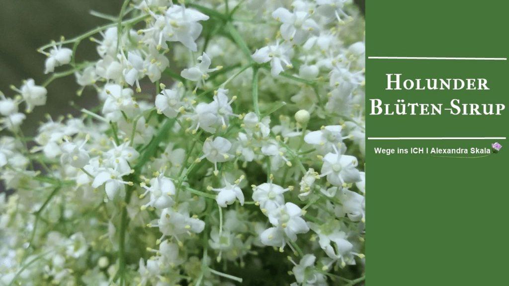 Holunder-Blüten-Sirup-Selbermachen