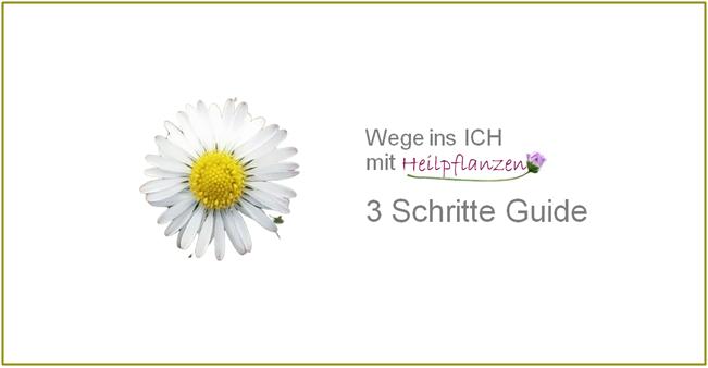 3_Schritte_Guide_Bild