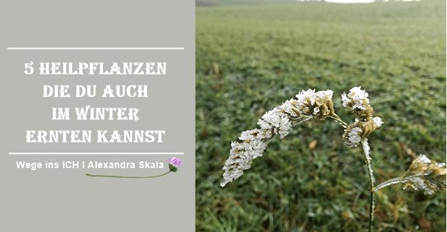 Heilpflanzen im Winter-Welche Kräuter im Winter.