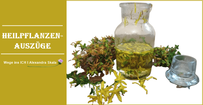 Wie du den Wirkstoff aus der Heipflanze ziehst-öLAUSZUG