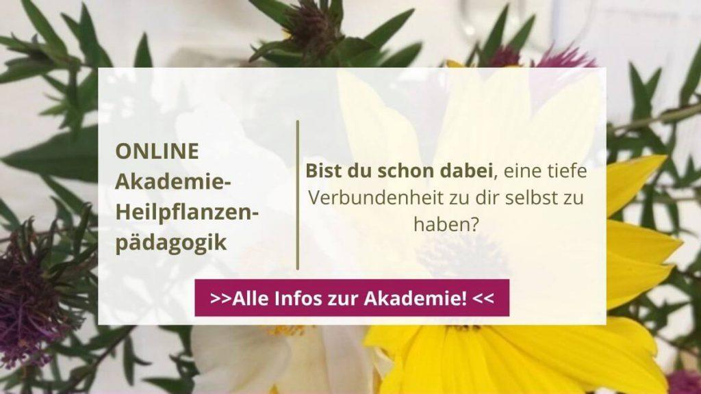 Online Akademie heilpflanzenpädagogik