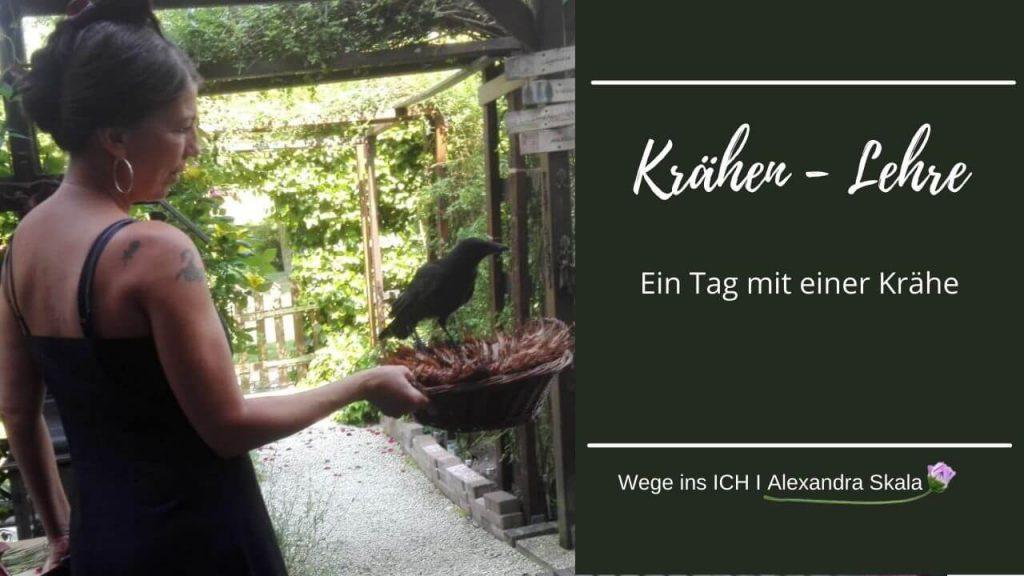 Krafttier-Vogel-Rabe-Krähe