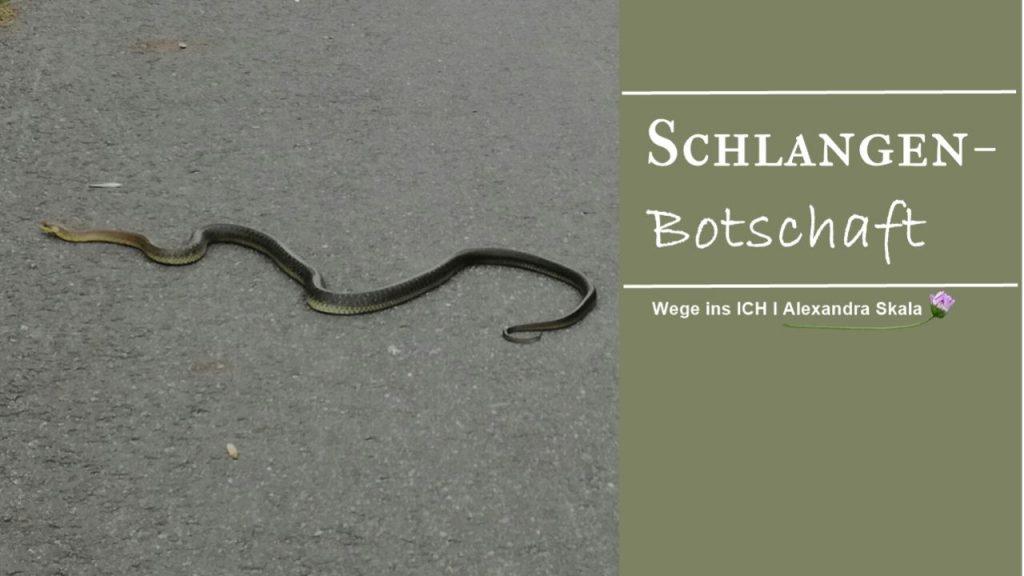 Schlangenkraft-Botschaft der Schlange-Botschaft der Natur