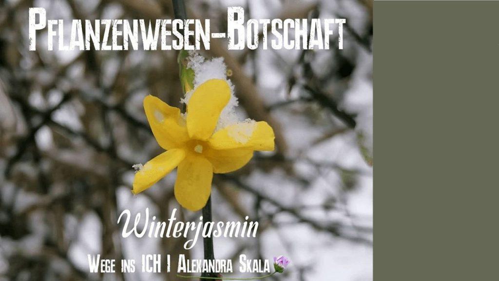 Pflanzenwesen-Pflanzenbotschaft-Pflanzenspirit-Pflanzendeva