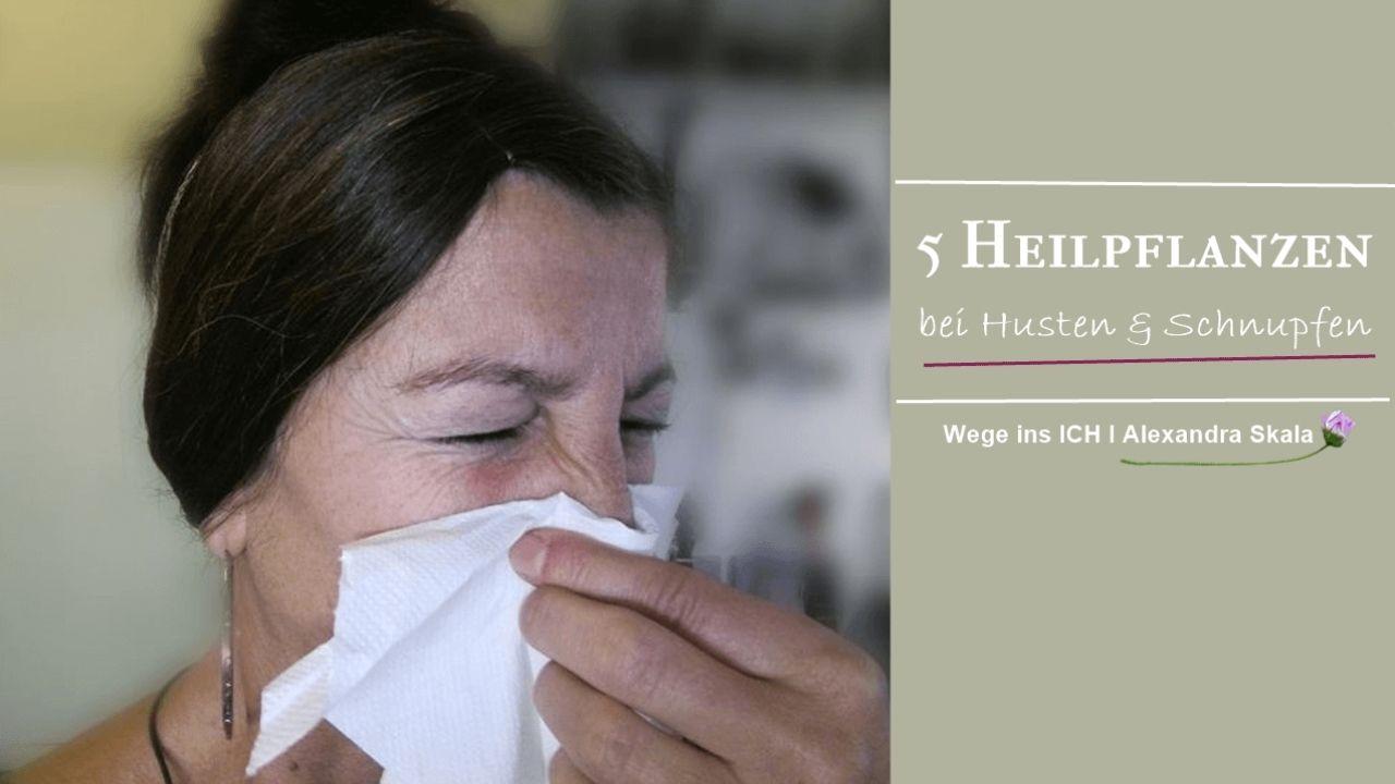 Hausmittel bei Husten-Kräuter-Schnupfen-Erkältung-Nase putzen