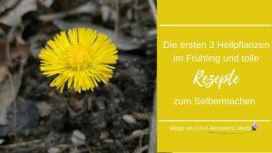 Huflattich mit gelber Blüte