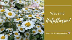Was sind Heilpflanzen und was macht man damit?
