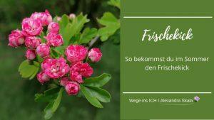 Rotdorn-Frischekick-Sommer