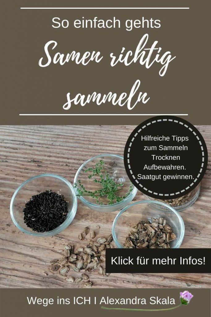Hilfreiche Tipps zum Sammeln-trocknen und aufbewahren. Saatgut gewinnen.